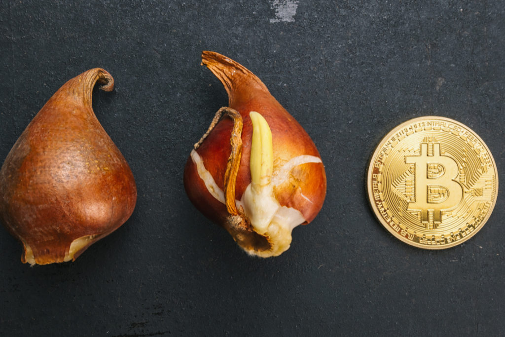 Bitcoin tulips