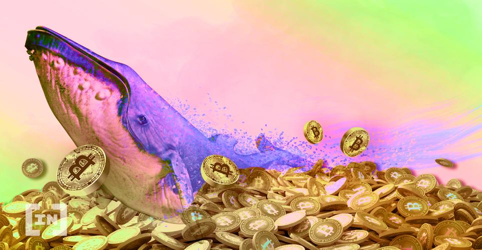 Whale Bitcoin BTC