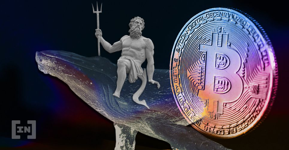 Bitcoin BTC Whale Bull