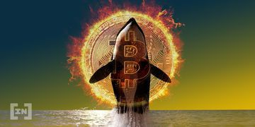 Whale BTC Movement Bitcoin